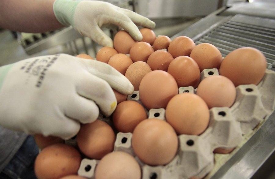 Рост цен на яйца в 2017 году