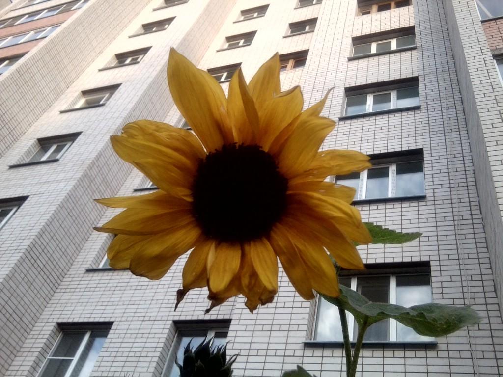 Будет ли продлена бесплатная приватизация квартир?