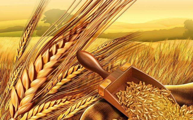 Bloomberg назвало Россию зерновой сверхдержавой