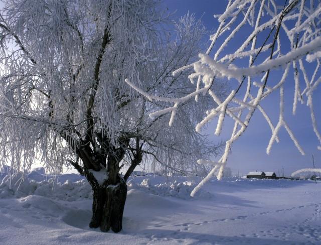 Погода в новоалексеевке генический район херсонской области