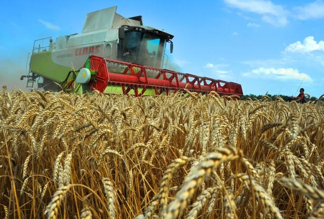 Три года без роста в полях. Правительство снижает виды на застрахованный урожай