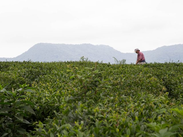 Медведев: льготная ставка по кредитам аграриям в 5% должна заработать к 2017 году