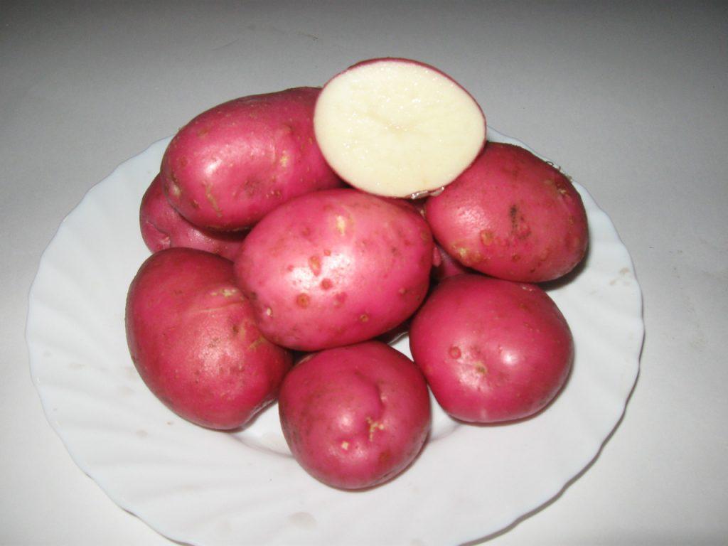 картофель3