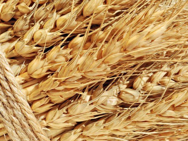 Прогноз цены на зерно в 2018