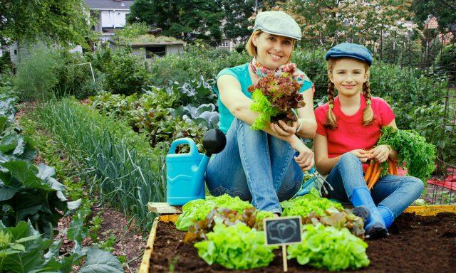 Фермеры и огородники получат больше прав в