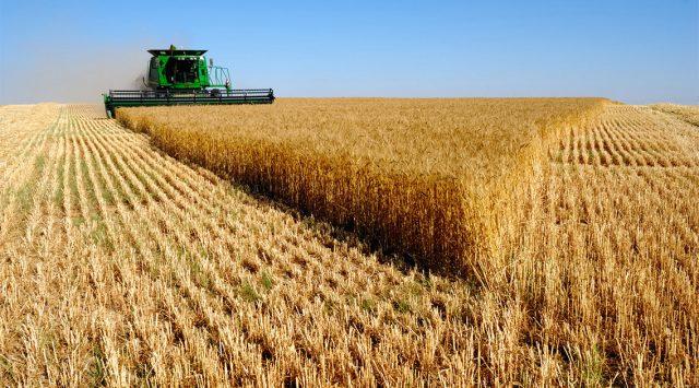 Аграриям добавят кредиторов. Число банков—участников госпрограммы кредитования АПК может вырасти