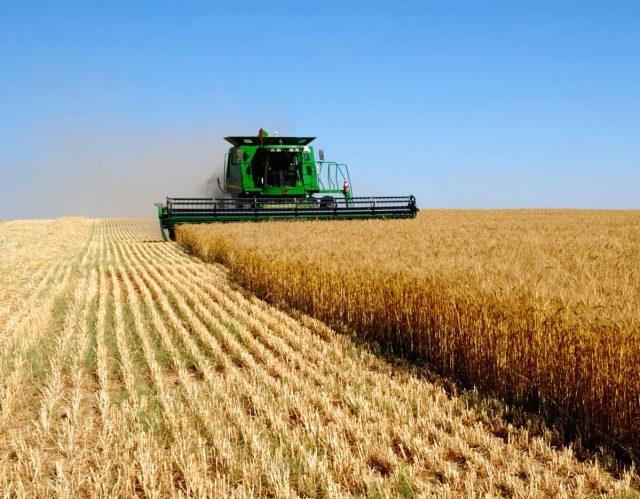 Кабмин РФ выделил почти 14 млрд руб на поддержку фермеров и развитие сельской кооперации
